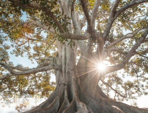 Foundations and Roots Determine Stability